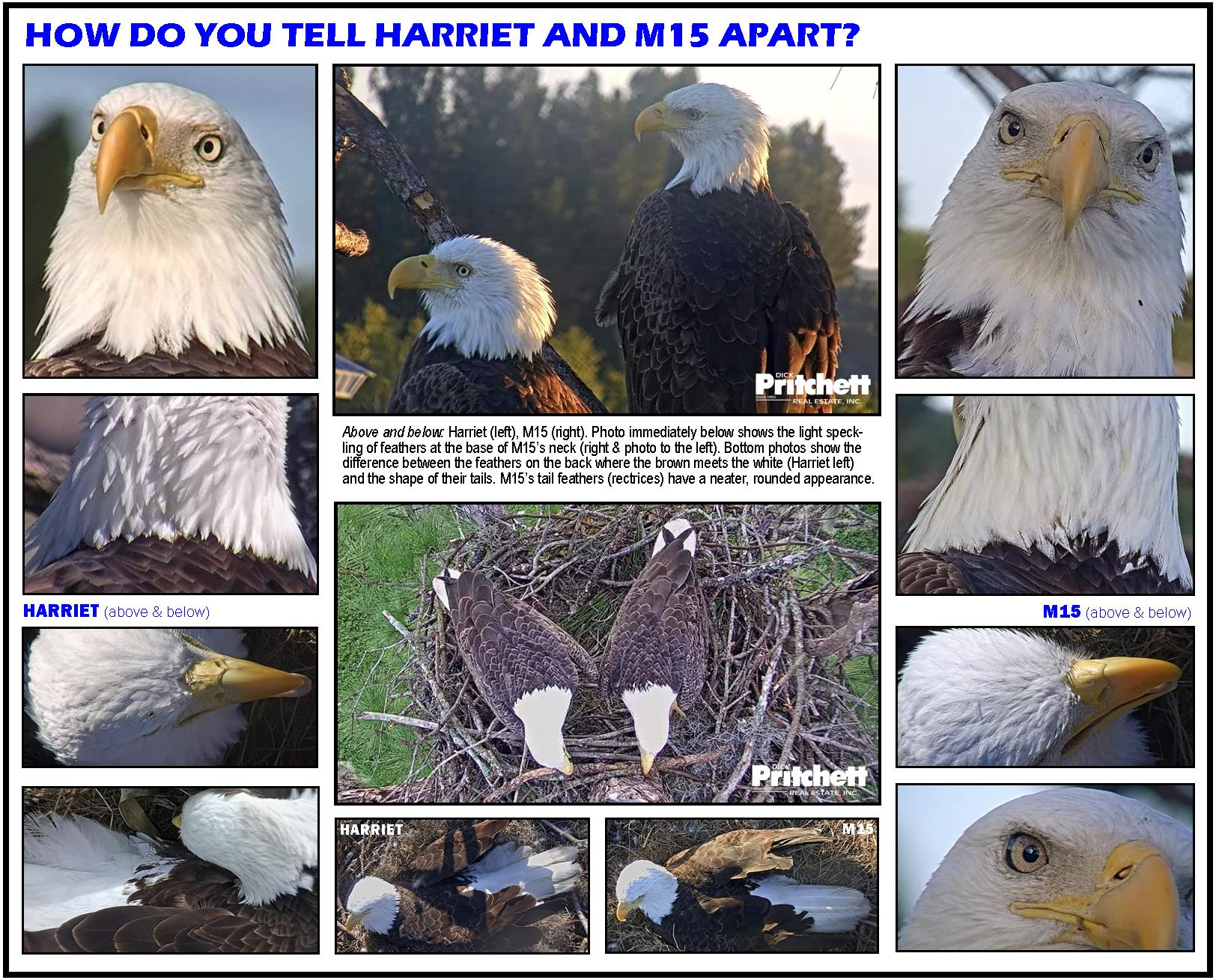 Eagle Cam Live Feed