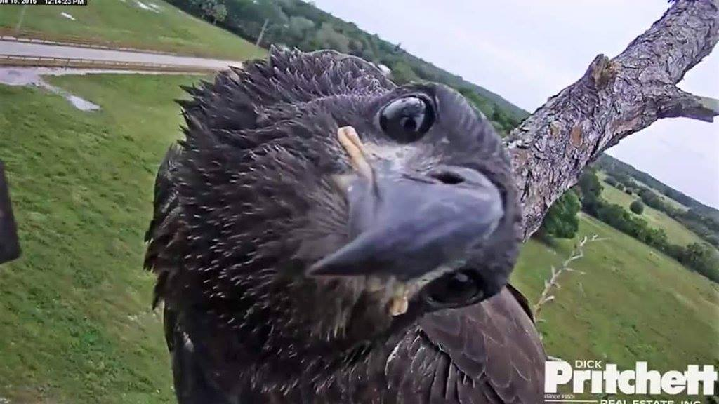 Southwest Florida Eagle Cam - Live Feed